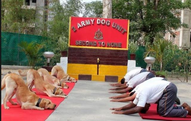 योग दिवस के खास मौके पर कुत्तों ने भी किया योग, देखें वीडियो