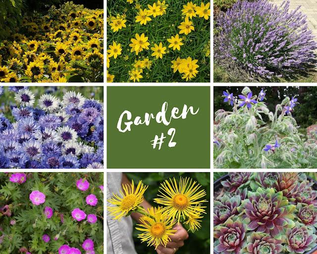 Rock-n-Zen Garden Plot #2 plants identification.