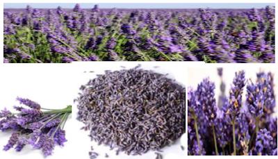 soin, fleur, curative,lavande, au naturel, aux naturel, massage, recette