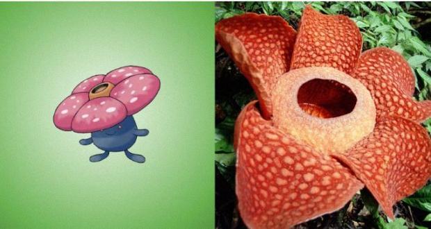Vileplume is a Rafflesia arnoldii