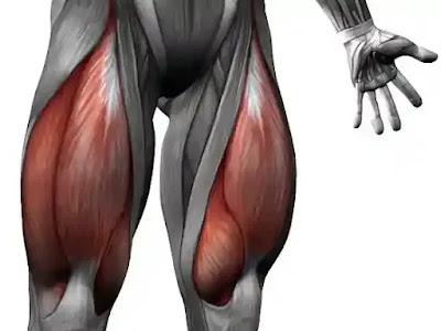 علاج الشد العضلي والتمزق العضلي في الفخذ الأمامي