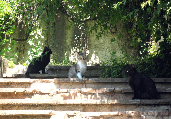 cats of le cannet