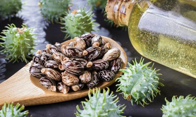 Ricinusovo ulje: Benefiti, lekovitost i upotreba