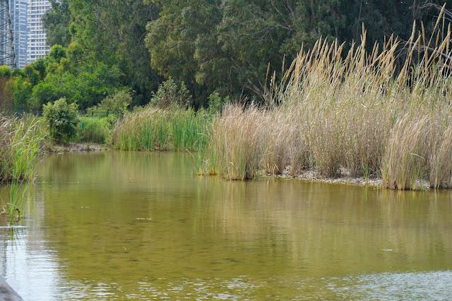 גן לאומי נחל ירקון