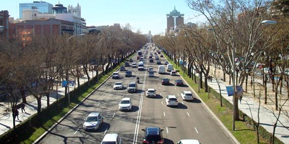 2bc7305d 747 árboles en mal estado serán retirados del Paseo de la Castellana | es  por madrid