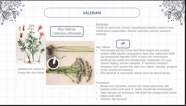 Tablet Herbal Antangin Good Night