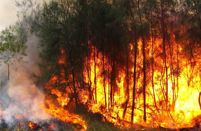 Município de Albufeira sensibiliza a população para os incêndios florestais