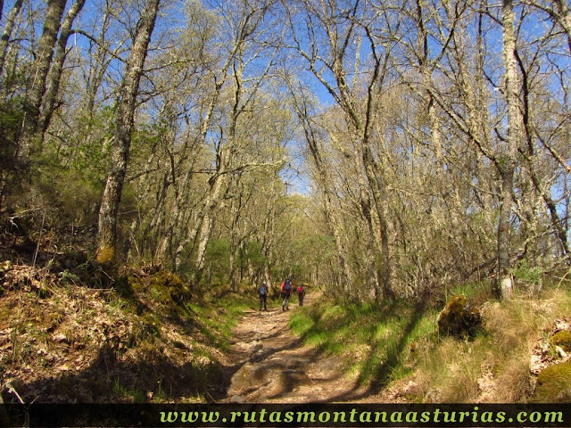 Bosque de robles en la ruta de la Cascada de Sotillo