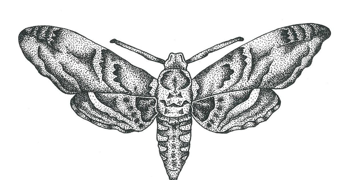 Moth drawing - photo#40