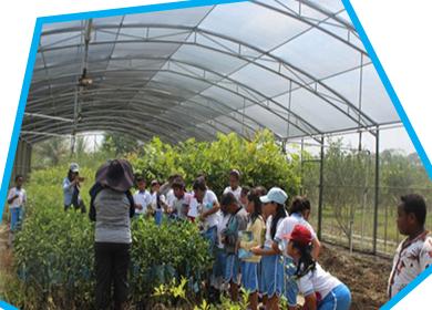 Field Trip Kelas IV SDK Kalam Kudus Timika ke Dinas Tanaman Pangan Hortikultura dan Perkebunan