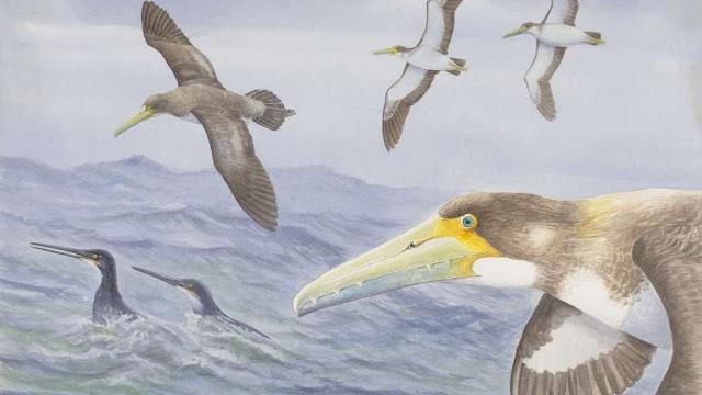 dünyanın en eski kuş türlerinden biri yeni zelanda'da keşfedildi