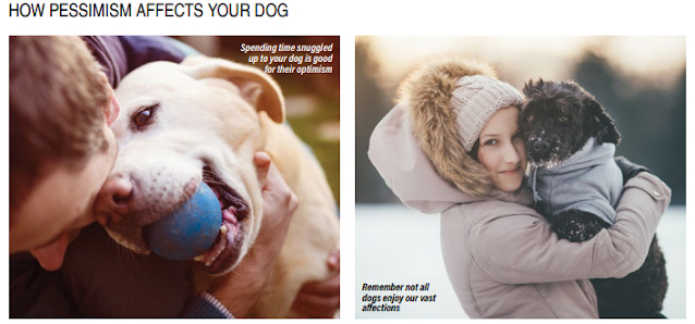 How Pessimism Affects your Dog?