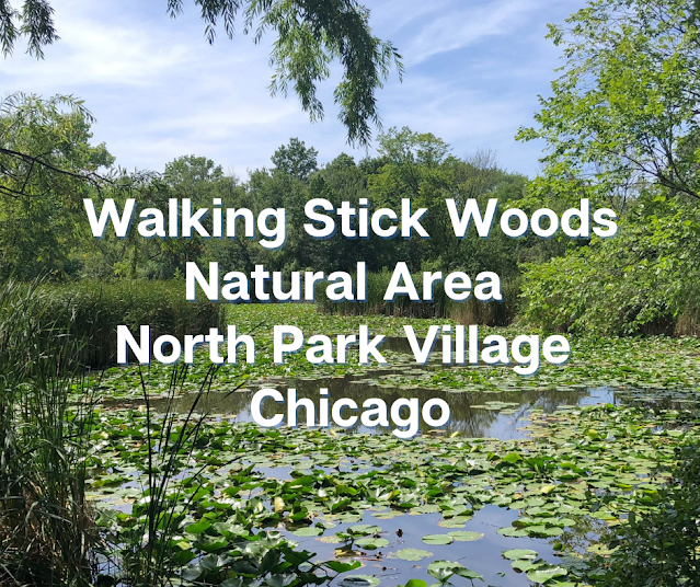 Late Summer Amble Through Walking Stick Woods Natural Area in Chicago