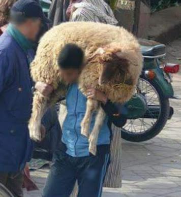 grappige jongen draagt schaap op zijn rug