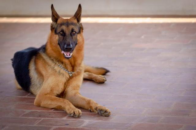 «Огромная трагедия»: Жившая в доме собака загрызла 6-недельного младенца