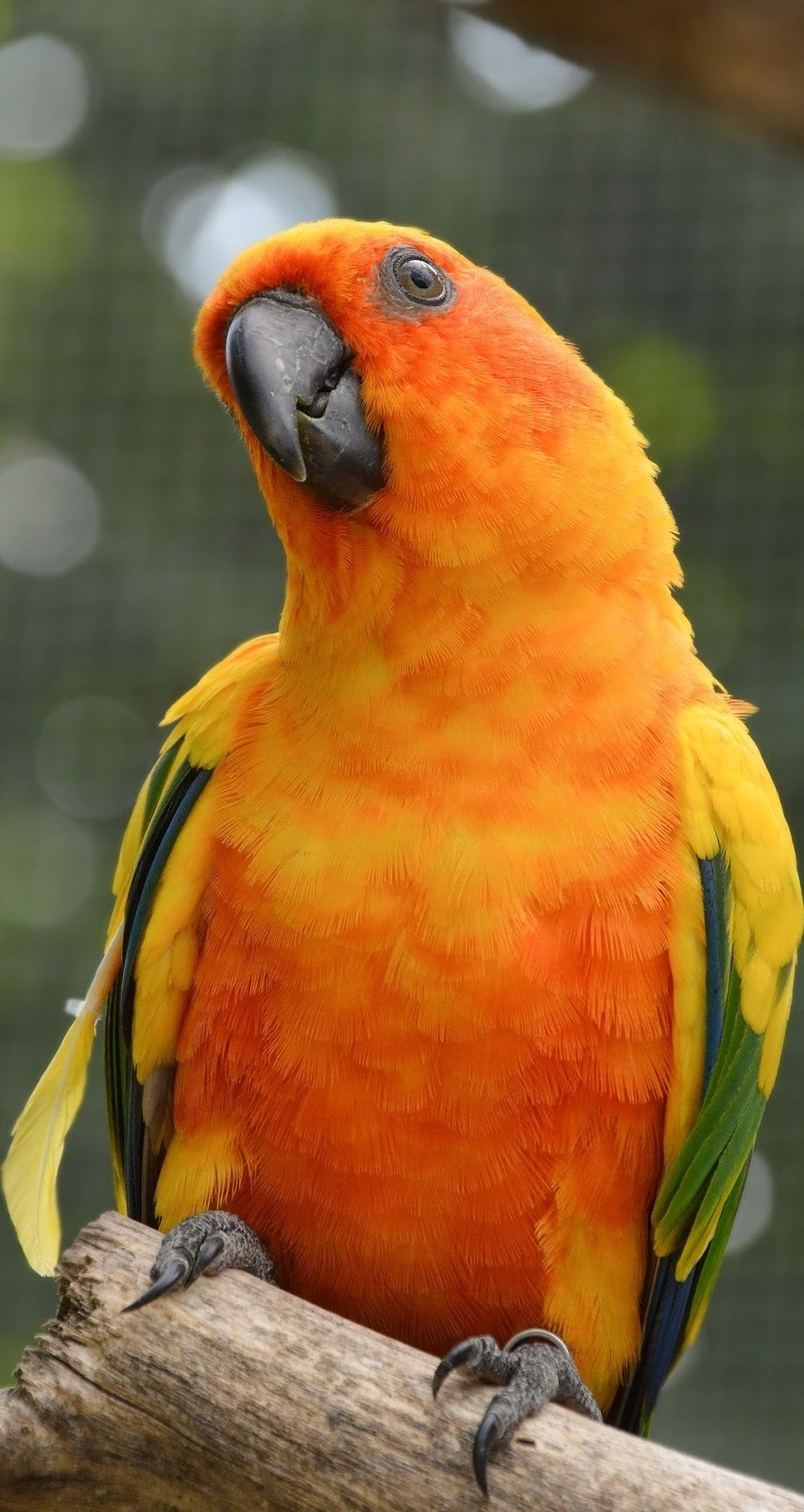 Photo of a conure.