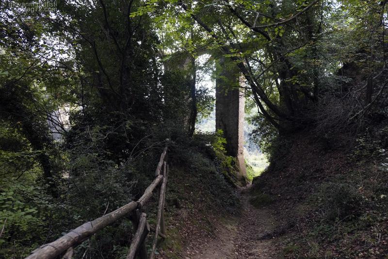 L'acquedotto di Monterano tra le piante del bosco