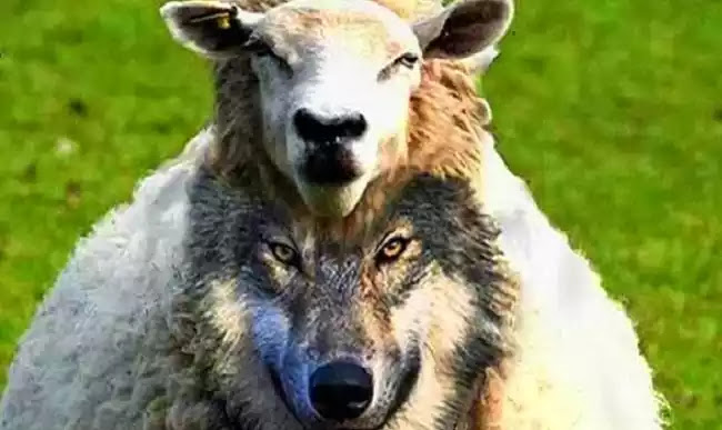 Τσοπανόσκυλα ντυμένα πρόβατα  αλωνίζουν στο ίντερνετ επι χρονιά με την βοήθεια του όχλου, και μερικές σημειώσεις