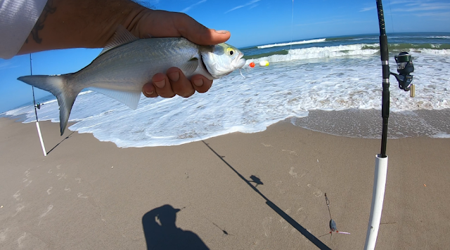 Florida, Florida Fishing, Fishing, East Coast, Surf Fishing, Florida Surf Fishing, Anglers, Fish Reports, Fishing Reports, Florida East Coast Surf Fishing,