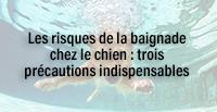 Les risques de la baignade chez le chien : trois précautions indispensables