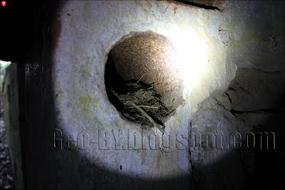 Птичье гнездо в в ДОТ-е №47