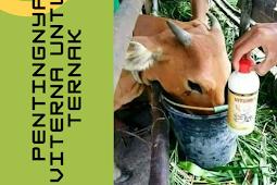 Pentingnya Viterna Nasa Untuk Ternak