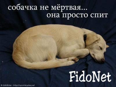 http://1.bp.blogspot.com/-n79vgVwsceA/UEqsNV4GSSI/AAAAAAAAAC0/bPMJLtJNVZ0/s400/sleep-dog.png