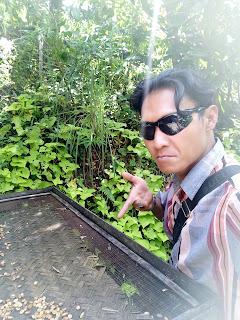 syam daihatsu