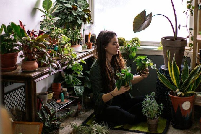 Some Top Benefits Of Buying Houseplants Online