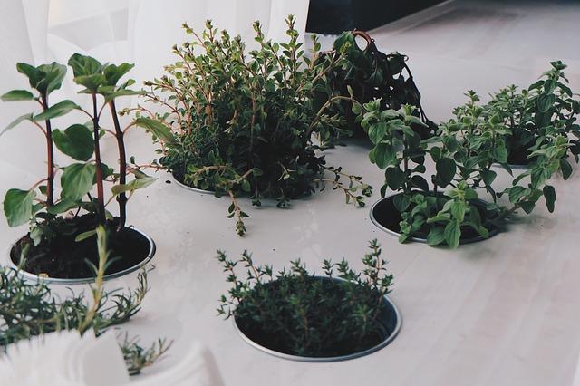 Plantas repelentes naturais para ter em casa