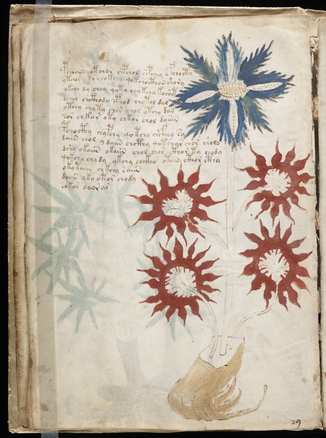 manuscrito032