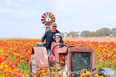 Exploring California: 5 Good Reasons to Visit The Flower Fields in Carlsbad + 5 Tips to Make Your Trip Even More Worthwhile