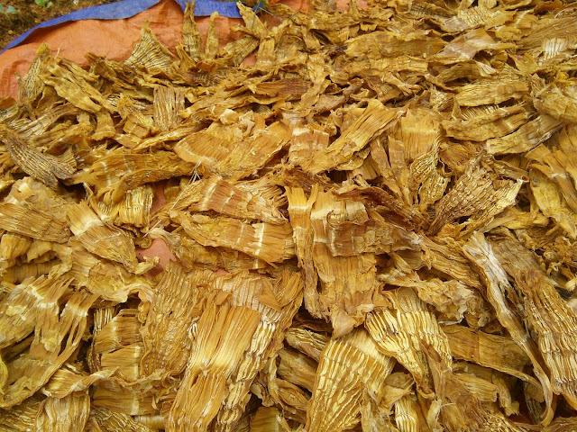 cac loai mang rung Tay Bac