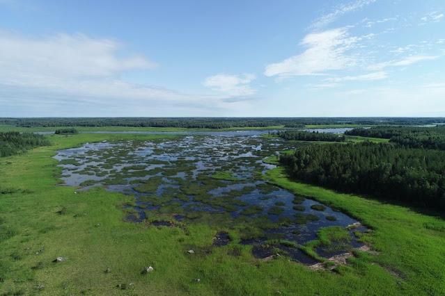 Rehevä kosteikko tai laguuni ilmasta katsottuna