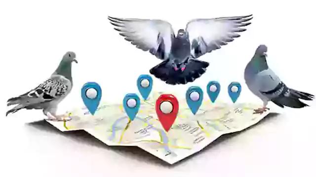 ما هو جوجل الحمامة Google Pigeon ؟