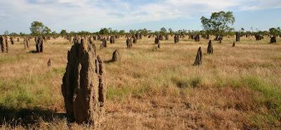 Widok termitier