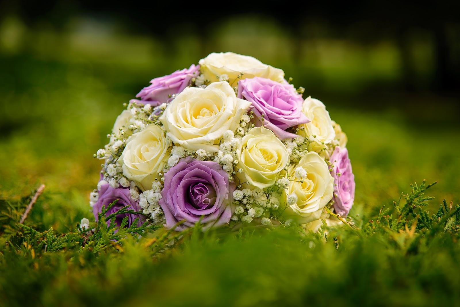 15 Gambar Bunga Mawar Terindah Server Tanamania Portal