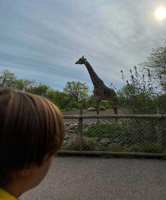 Dream Night at the Zoo Pittsburgh Zoo & PPG Aquarium