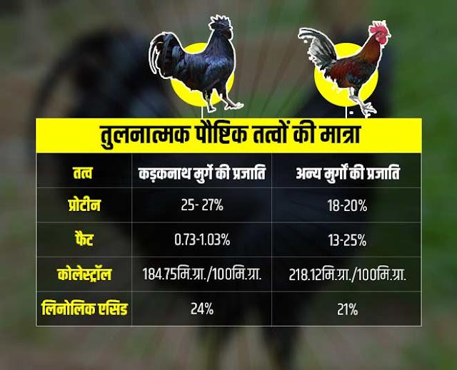 jhabua-famous-kadaknath-breed-of-chickens-झाबुआ कड़कनाथ मुर्गे को मिला जीआई टैग