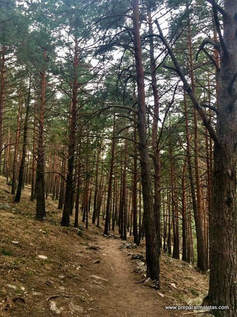 sendero entre pinos Madrid