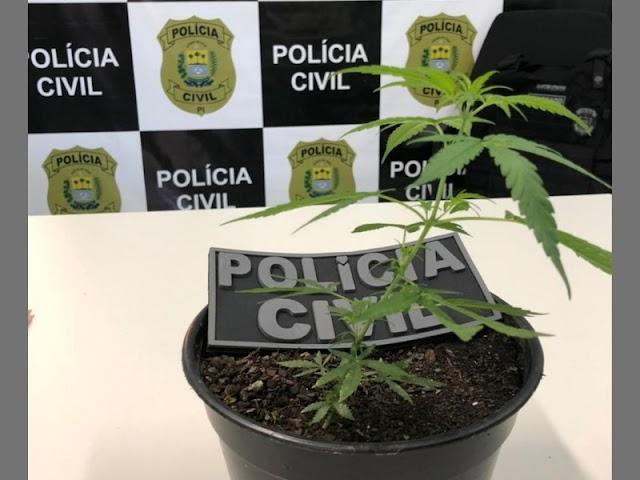 PC-PI deflagra Operação São Pedro contra o tráfico de drogas em Elesbão Veloso