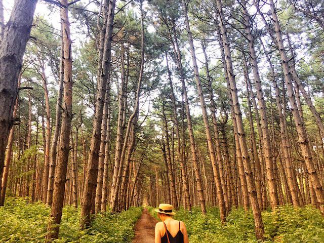 Лес в Щепкино