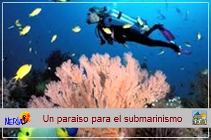 La riqueza de los fondos marinos de Maro lo convierten en un lugar idílico para la práctica del submarinismo
