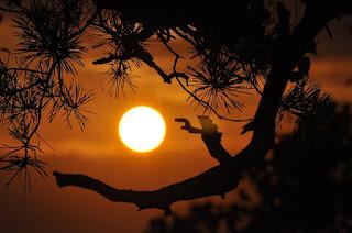 Sepotong Senja Oleh Vina Khusnul Khatimah Tulungagung