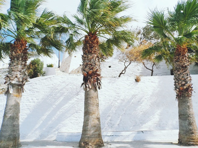 Paros island nature and palm trees