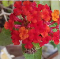 cute little flowers