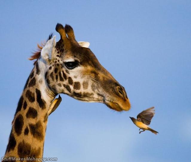Wild Animals Pictures, Wild Animals Photos, Wild Animals Images