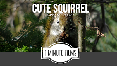 Cute Squirrel Film