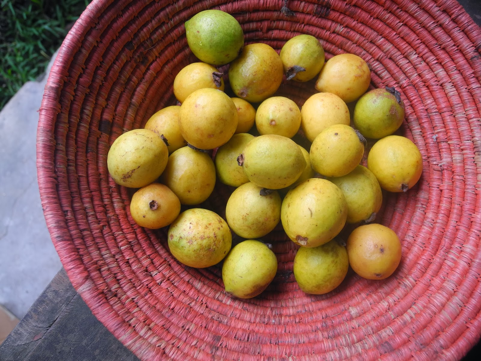 Modern Nomad: A field guide to fruit in Madagascar