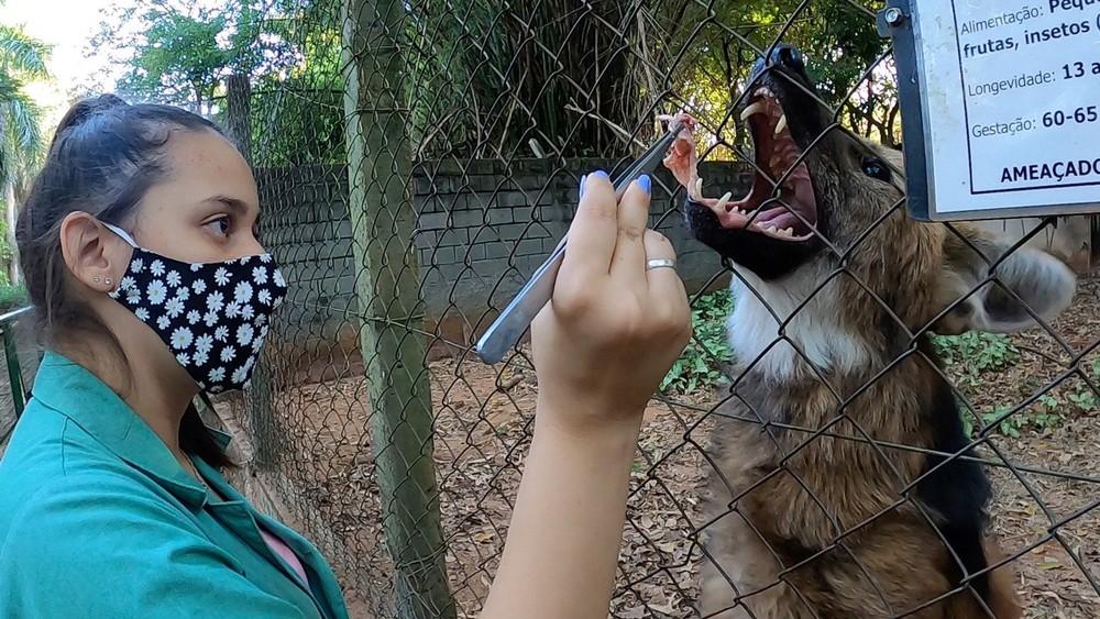Zoológico de Rio Preto promove condicionamento e treinamento de animais